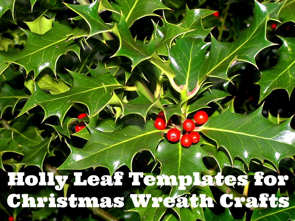 for Free Wreath Stencils or Coloring Pages & Holly Leaf Templates