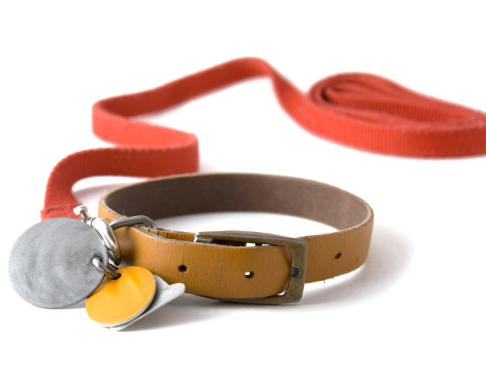 Leather dog collar with registration tags and red leash for kids to make and sell at fairs