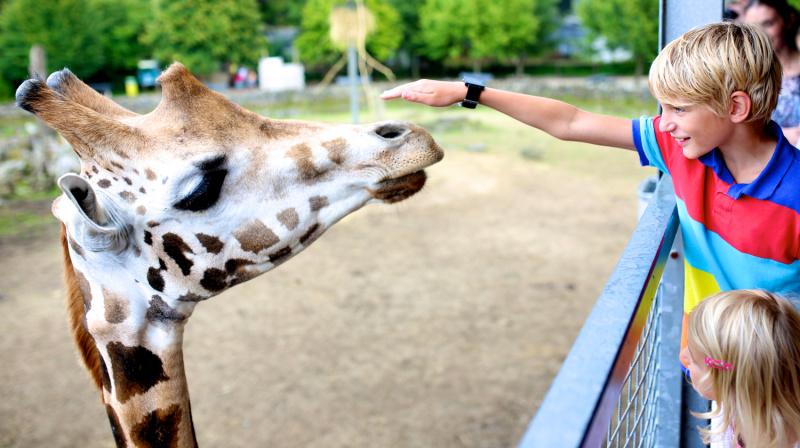 little kids petting a giraffe at the zoo